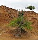 Poznávací zájezdy do Kolumbie poušť Tatacoa