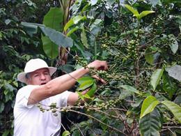 Poznávací zájezd na Kostariku Monteverde