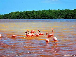Río plameňáci.jpg