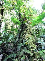 Kostarika zájezdy