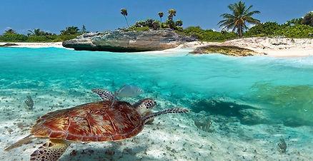 Výlet na želvy do Akumalu