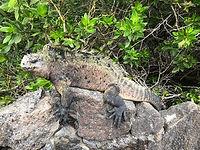 Poznávací zájezd Ekvádor, Galapágy, Amazonie a mořští prehistoričtí leguáni