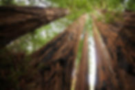 coastredwoods.jpg.860x0_q70_crop-scale.j