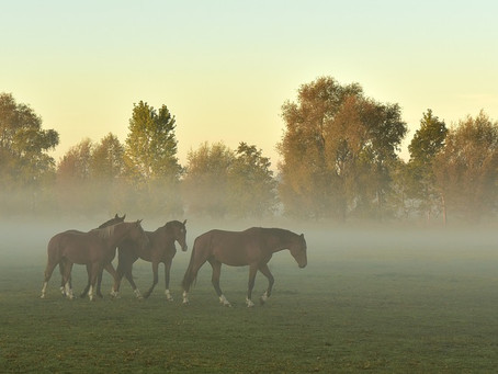 Grundbedürfnisse bei Pferden
