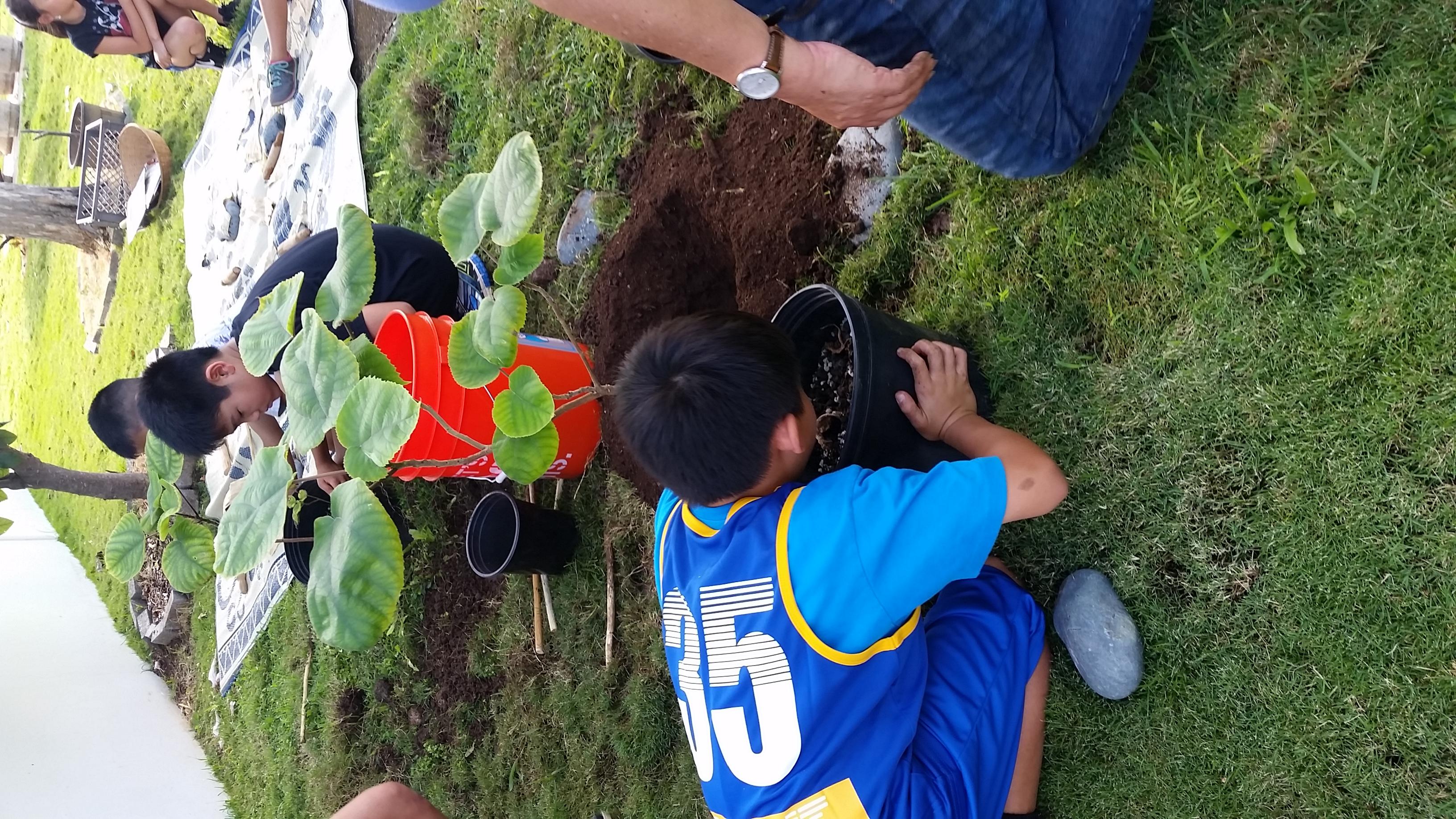 Planting Wauke Poaaha
