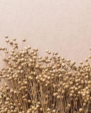 flax_1600pxwide.jpg