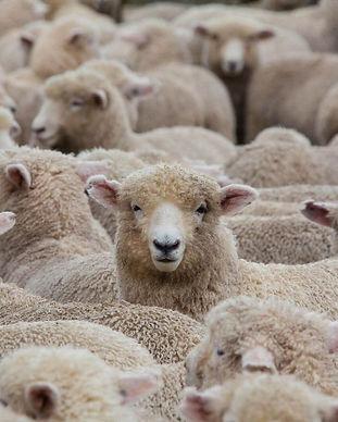 wool (1).jpg