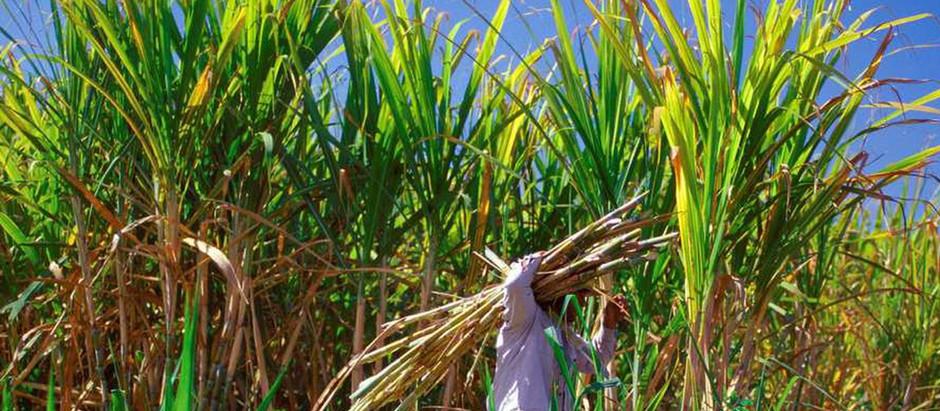 Les flacons fabriqués à base de canne à sucre 100 % végétale : une révolution dans l'emballage.