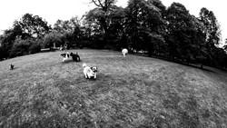 Animals -JUICE TEA PHOTOGRAPHY