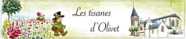 bandeau tisanes d'olivet-01.jpg