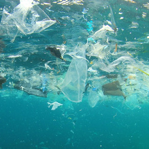What about the Great Pacific Garbage Patch?