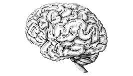 gray_matter_murderer_brains_1600.jpg