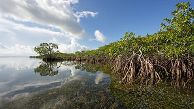 biscayne bay mangroves.jpg