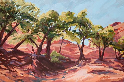 Cottonwood Oasis