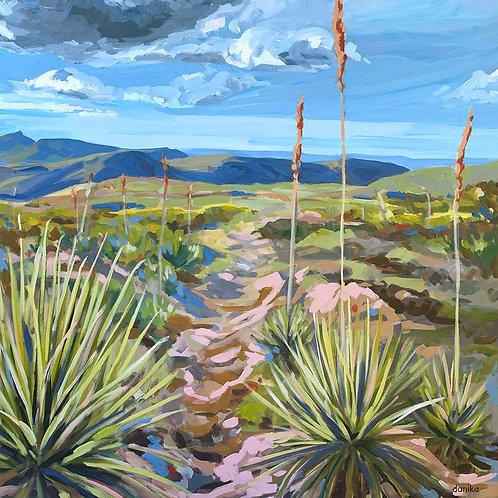 Rainbow Yucca