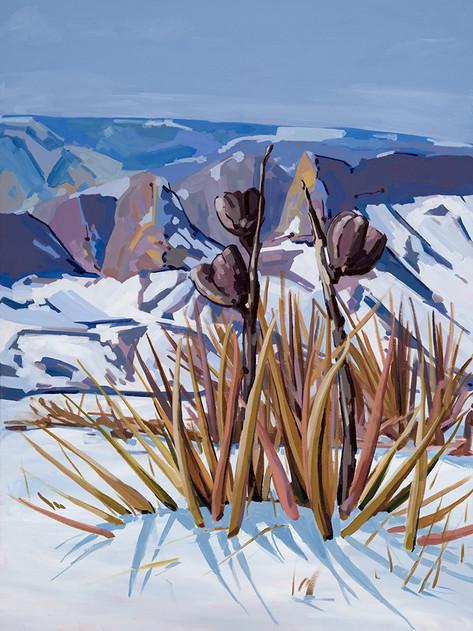 Snow Yucca