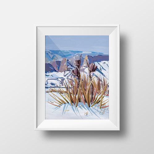 Last Chance: Snow Yucca Print