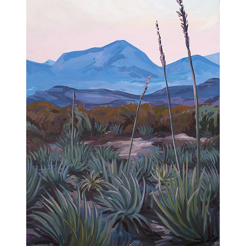 Blush Agave Limited Edition Print