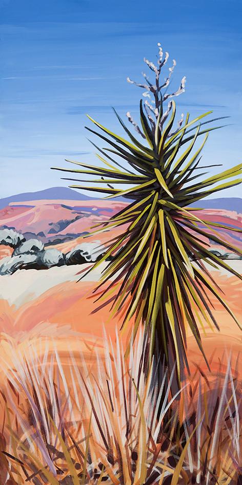 Davis Mountains Yucca