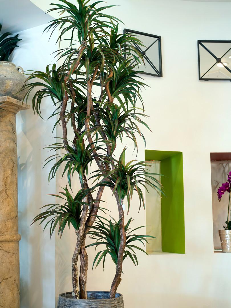 Custom Dracaena Tree