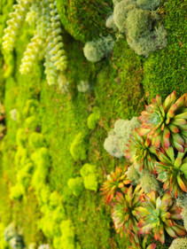"""Detail of """"Living"""" Wall"""