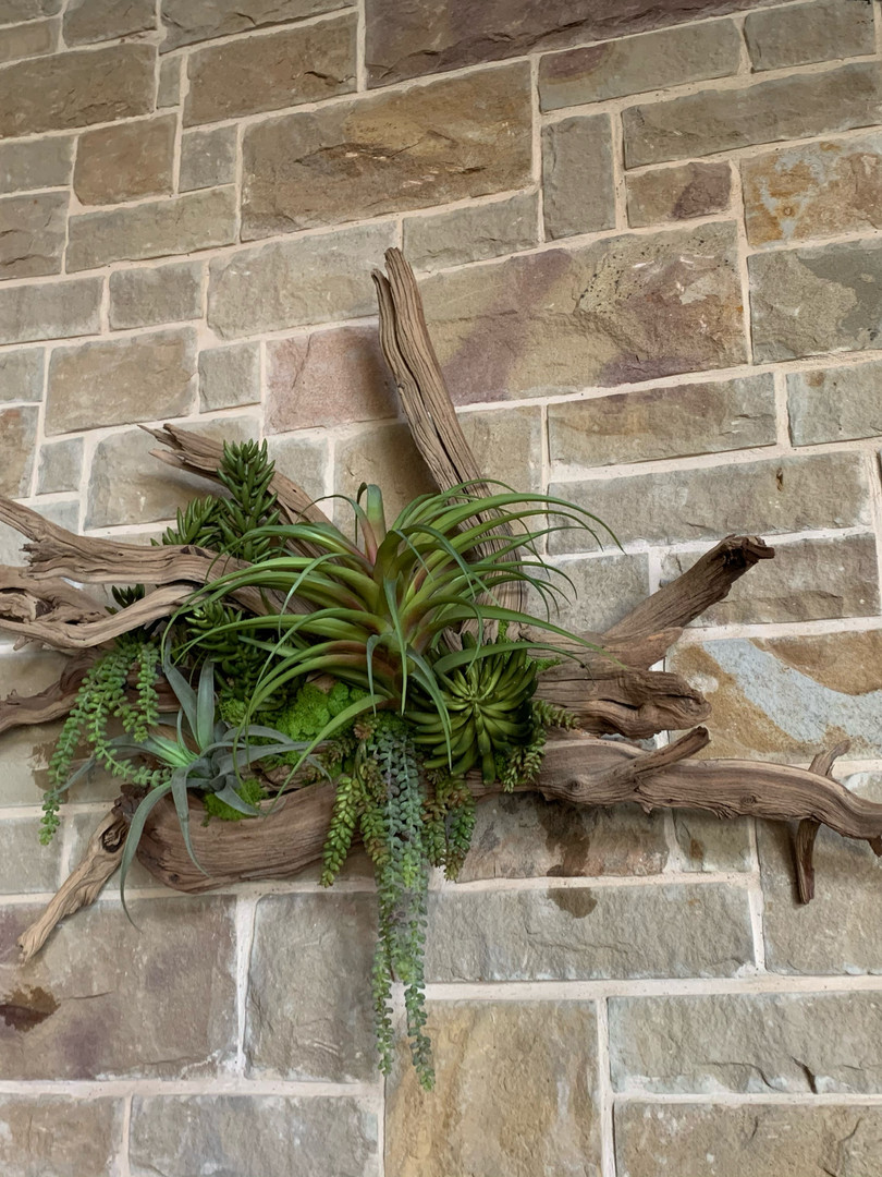 Natural wood Wall hanging with tillandsia and succulents