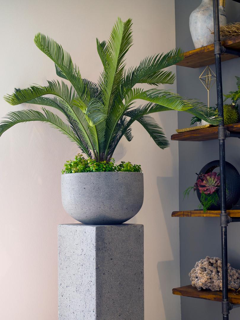 Artificial Sego Palm