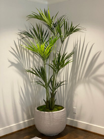 7' Artificial Kentia Palm Tree