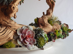 Succulents on Natural Wood