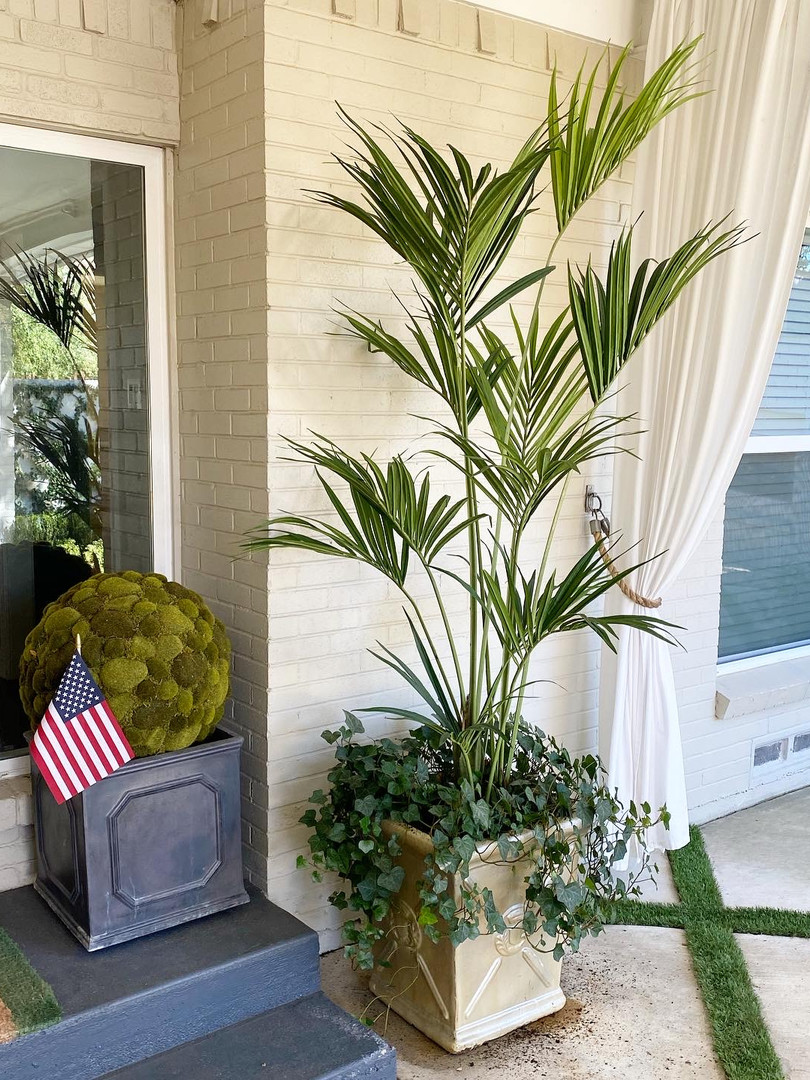 Kentia Palm mixed with live Ivy