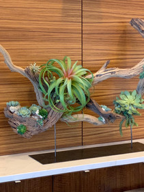 Natural Wood Sculpture on custom made stand with artificial tillandsia