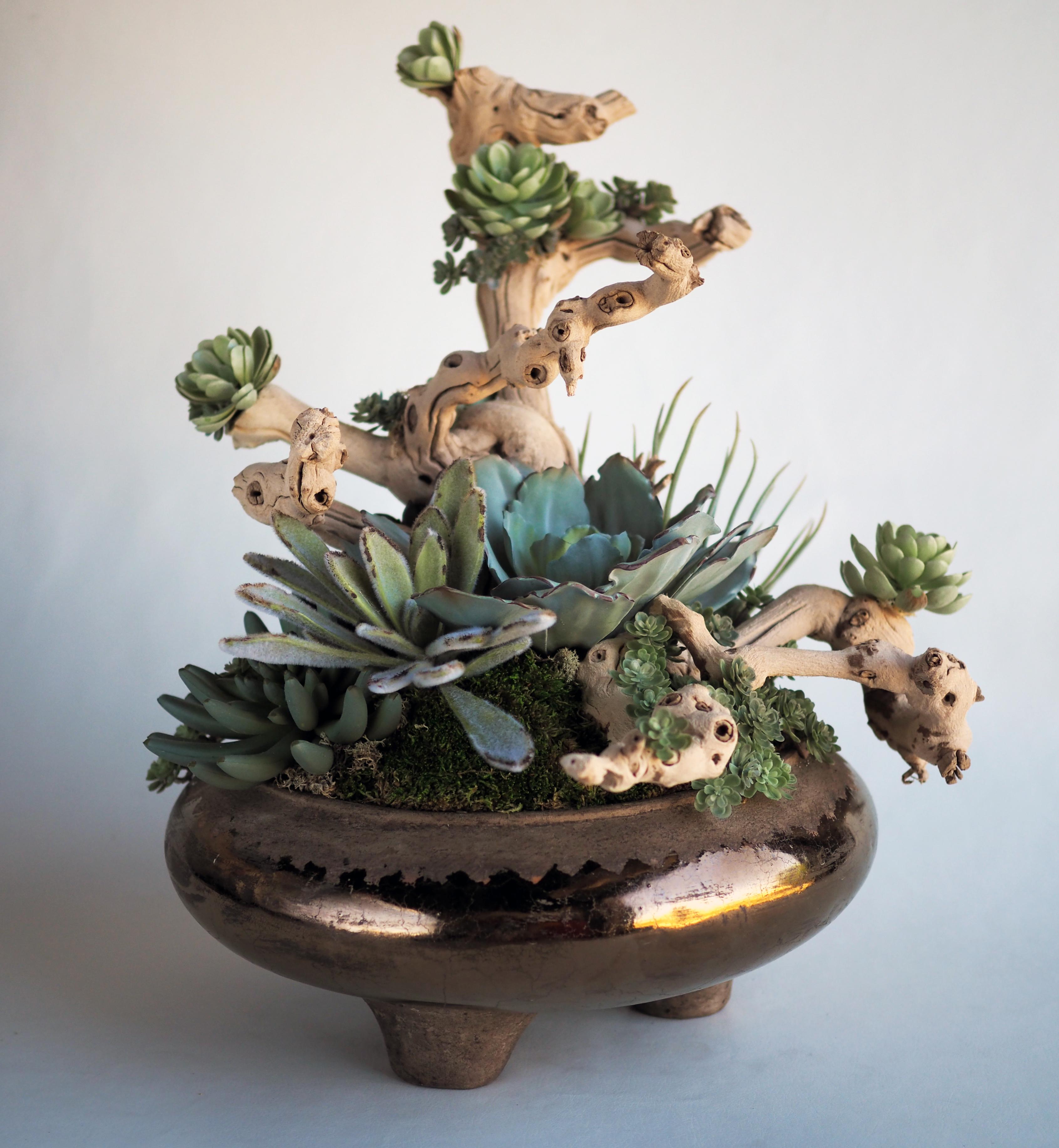 Succulent on Driftwood Arrangement