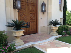 Sego Palms Flanking an Entry