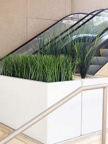 UV Resistant grasses planted in public space.