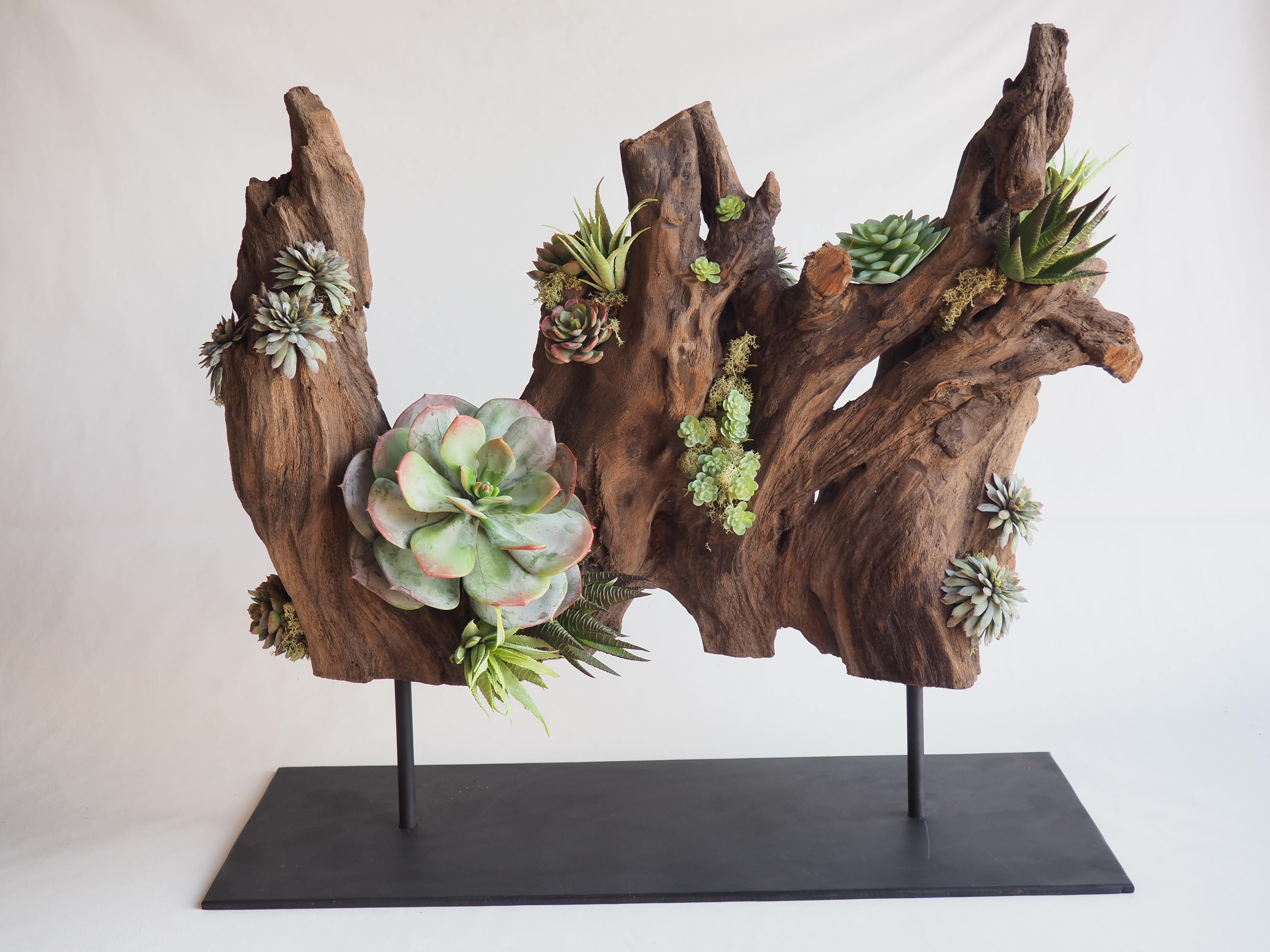 Succulent and driftwood Arrangement
