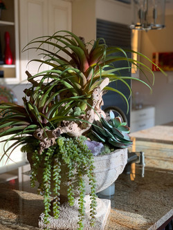 Tillandsia and grapevine arrangement