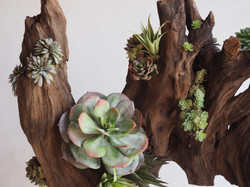 Succulent and driftwood Arrangement