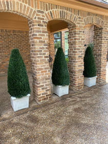 UV resistant pond cypress topiaries