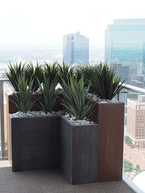 UV Resistant Agave Planting on highrise