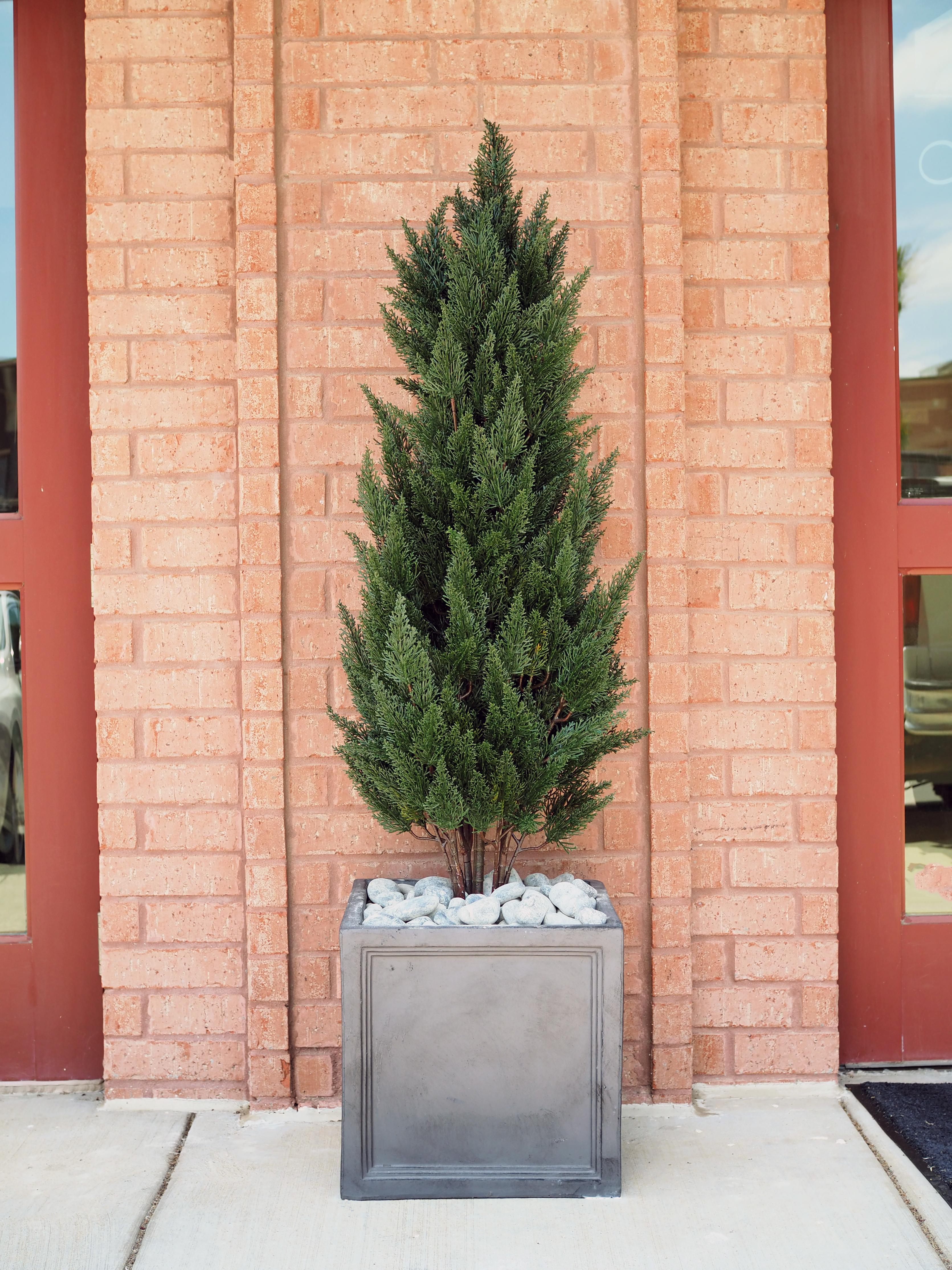 Outdoor Juniper Tree Planter