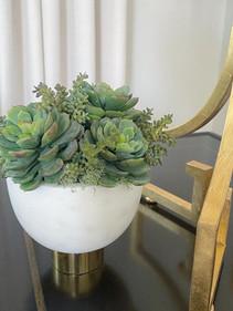 mixed succulent
