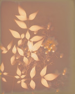 Heavenly Bamboo 7