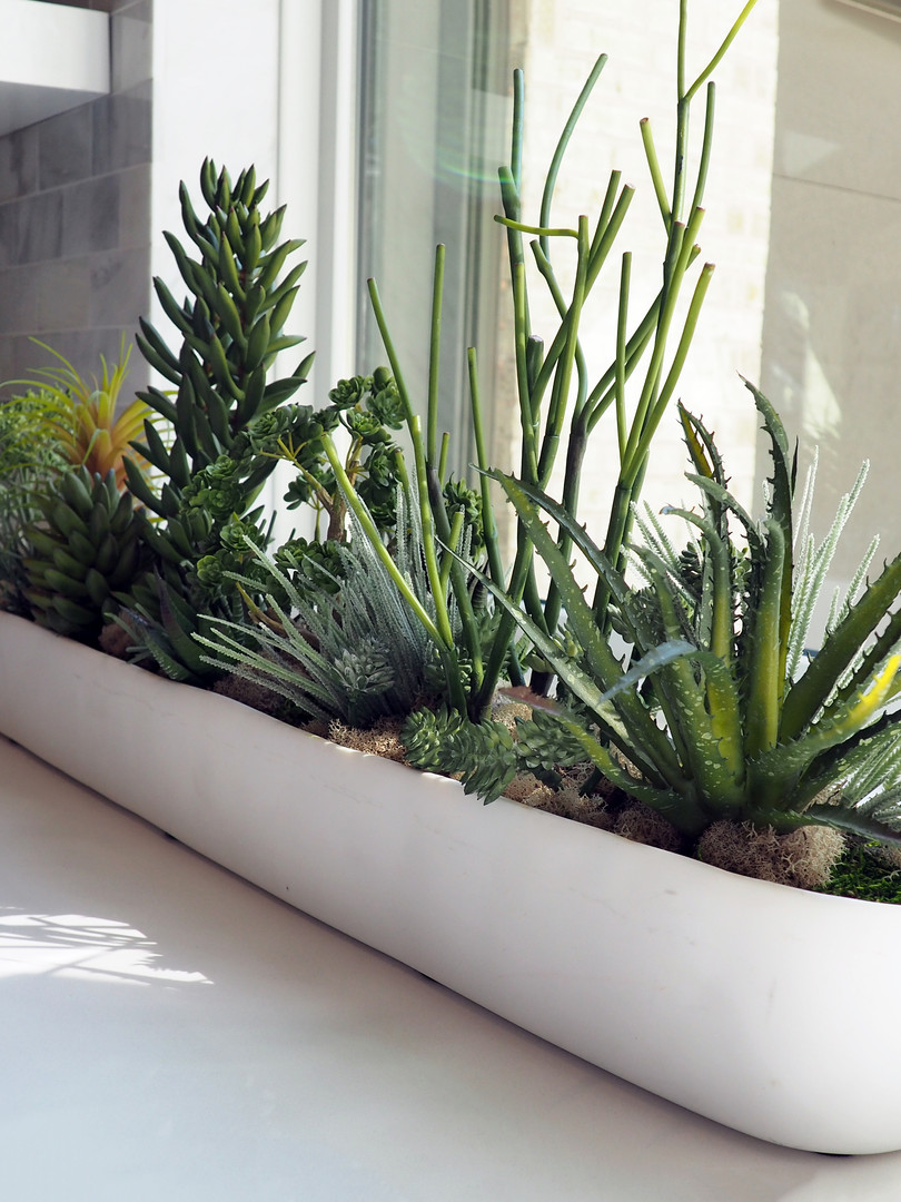 Mixed succulent planting in long modern container