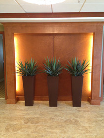 Potted Agave Plants