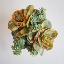 Succulent Arranagement