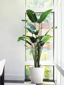 Artificial Banana Palm Tree