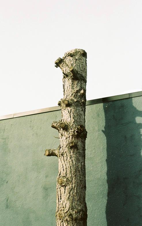 Tree, 2015