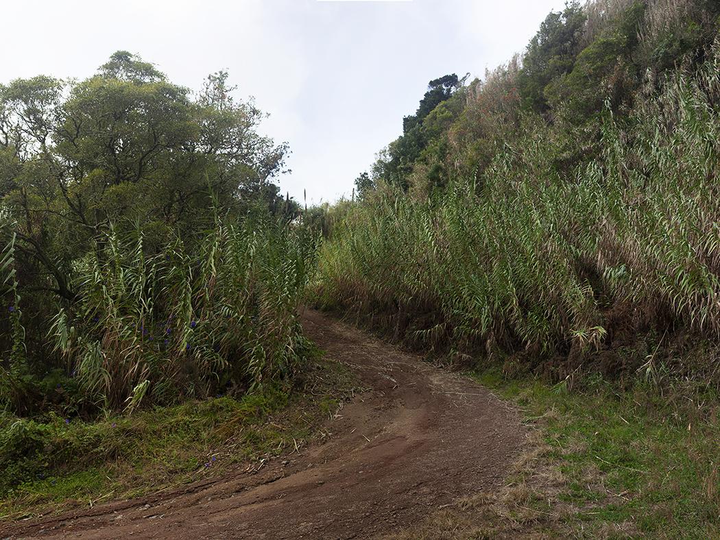 Jungle_Ginetes