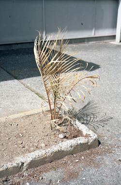 Dry Plant, 2015