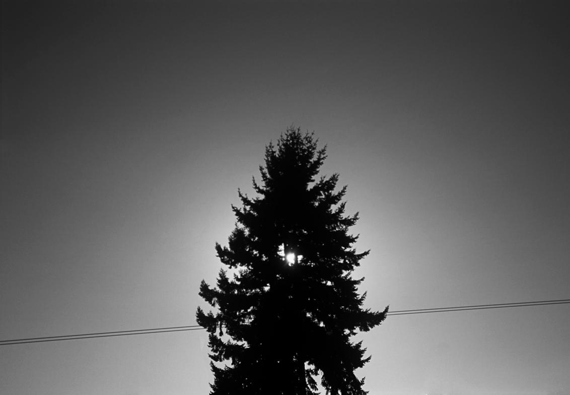 Tree Halo, 2015